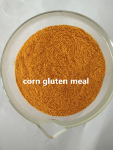 Corn Gluten Meal / Corn Gluten for Animal Feed pictures & photos