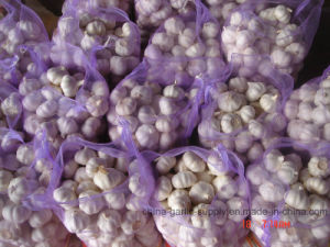 Fresh White Garlic with Good Quality