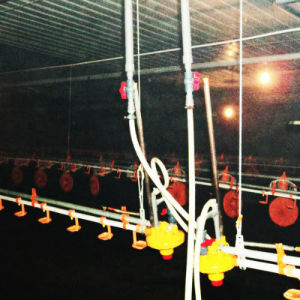Poultry Equipment of Chicken Farm in Poultry Livestock pictures & photos