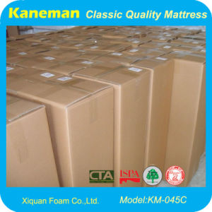 Rolled Foam Mattress in Carton Packing pictures & photos