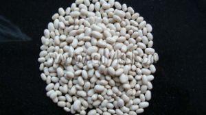 White Kidney Bean China Origin pictures & photos