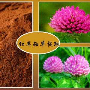 GMP Clover Blossom Extract Isoflavones 15% pictures & photos