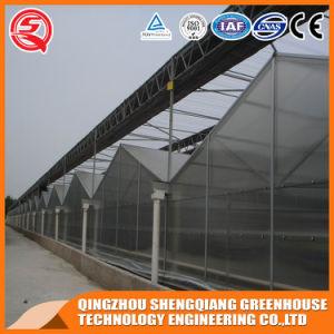 Agriculture Vegetable/ Garden PC Sheet Venlo Green House pictures & photos