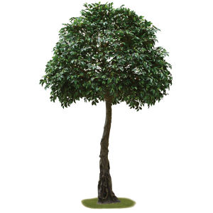 Artificial Ficus Tree Plant in Plastic Pot pictures & photos