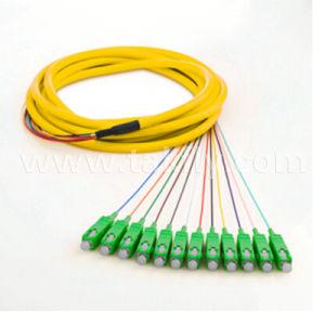 12 Core Sc APC Sm Breakout Ribbon Fiber Optic Pigtail pictures & photos