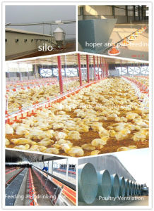 Poultry Farm with Full Set Poultry Equipment pictures & photos