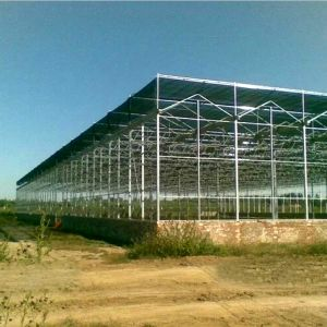 The Hot Sale Multispan Glass Greenhouse for Agriculture pictures & photos