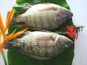 Frozen Whole Round Tilapia pictures & photos