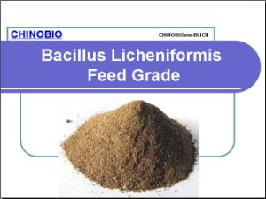 Feed Additives Bacillus Licheniformis Feed Grade for Animal