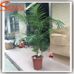 Home Decoration Artificial Plastic Bonsai Phoenix Palm Tree pictures & photos