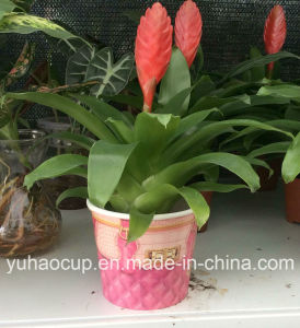 2016 Hotsale Disposable Indoor Flower Planter (YH-L257) pictures & photos