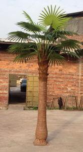 Artificial Plants & Flowers of Gu-SL-Palm123 pictures & photos