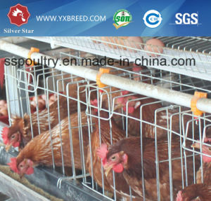 a Type Chicken Egg Laying Cages pictures & photos