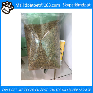 Competitive Price Yellow Bulk Dried Mealworms for Fish Food pictures & photos