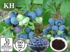 Bilberry Extract, Anthocyanidins15%-35%, Anthocyanins 15%-35% pictures & photos