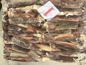 200-300g Argentina Squid pictures & photos