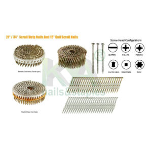 (Square Head) Galvanized Wire Collated Screw for Furnituring, Industry pictures & photos