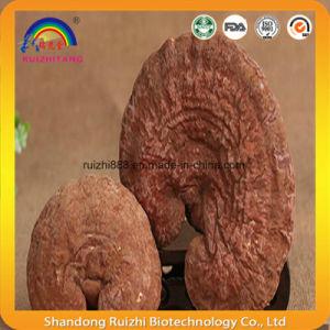 Organic Lingzhi/ Reishi/ Ganoderma Lucidum Shell-Broken Spore Powder pictures & photos