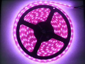 2835/3528/5050 60LEDs/M Pink LED Strip Light pictures & photos