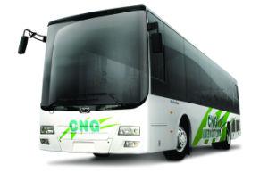 Bus (9)