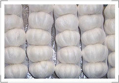 China White Garlic Strong Flavor pictures & photos