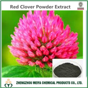 Natural Red Clover Powder Extract with Isoflavone 2%-40% pictures & photos