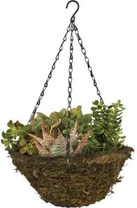 Fern Moss Coconut Fiber Hanging Basket with Brown Chain pictures & photos