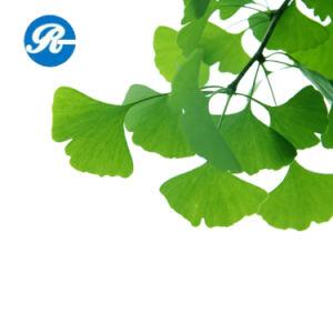 Flavones 24% Lactones 6% Ginkgo Biloba Extract pictures & photos