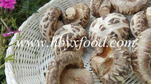 Dried Flower Mushroom, China Shiitake Mushroom, Healthy Food pictures & photos