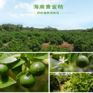 Lime Plant Extract Powder for Dietary Supplements pictures & photos