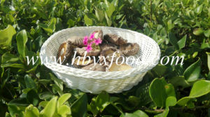 Green Product 2-5.5cm Brown Dried Smooth Shiitake Mushroom Food Whole Price pictures & photos