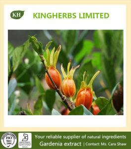 Gardenia Extract Geniposide 10%~98% HPLC pictures & photos