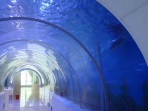 Acrylic Tunnel in Public Aquariums of Oceanarium pictures & photos