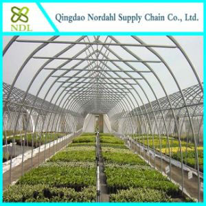 Agricultural Greenhouse, Film Greenhouse, Commercial Greenhouse, pictures & photos