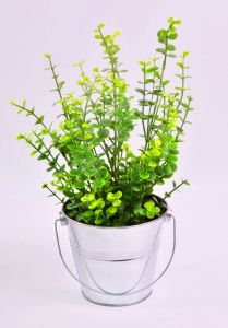 Green Grass and Herbs in Tin Bucket for Home Decoration pictures & photos