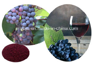 Jmy 100% Natural Grape Skin Extract 5% Resveratrol, 25% Polyphenols; 4: 1 to 20: 1 pictures & photos