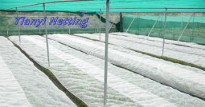 Anti Insect Net pictures & photos