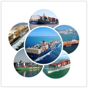 Consolidatesea Cargo Shipping Sea Freight Forwarding Services to Spain pictures & photos