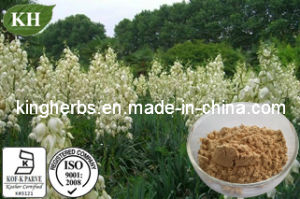 Natural Yucca Extract Saponins 30%-80% pictures & photos