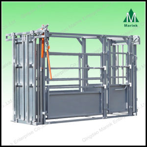 Cattle Chute with Scale for Weighing pictures & photos