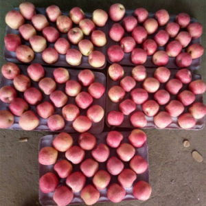 Fresh Red Yantai FUJI Apple pictures & photos
