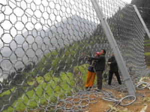 China Good Supplier of Chain Link Fence pictures & photos