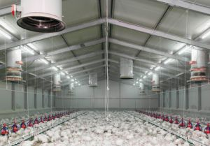High Quality Steel Poultry Equipment Chicken Farm House (PCH-11) pictures & photos