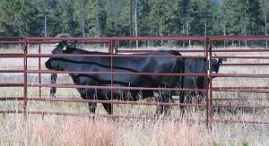 Powder Coated Cattle / Livestock Fence Panel pictures & photos