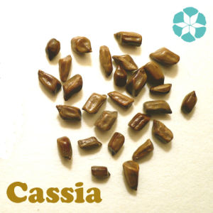 Cassia Seed Extract / Cassia Obtusifolia Extract pictures & photos