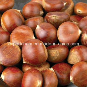 2016 Chinese Organic Fresh Chestnuts Raw Chestnut pictures & photos