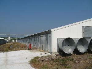 Qingdao Superherdsman Professional Poultry Equipments pictures & photos