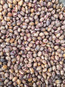 Export Good Quality Fresh Chinese Light Speckled Kidney Bean pictures & photos