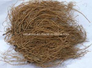 Manufacturer Asarum/The Root of Chinese Wild Ginger Extract Powder pictures & photos