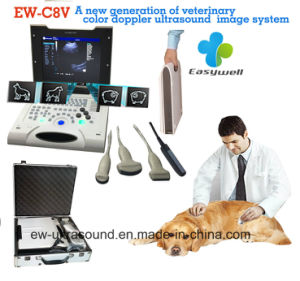 Laptop Color Doppler Ultrasound System Ew-C8V with Convex Probe for Veterinary with Specialty Obstetric Measurement Software Package